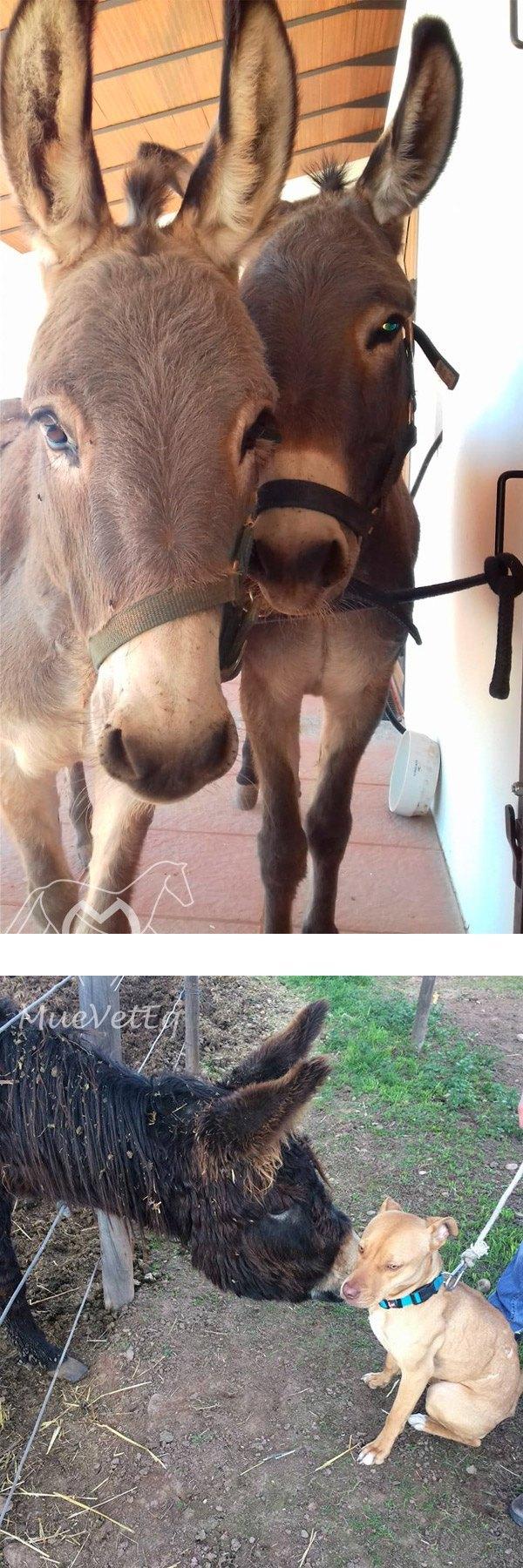 artículo Mueveteq algunos datos sobre burros