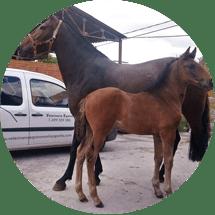 servicios veterinarios rioja burgos alava navarra